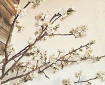 春が、そこまで。